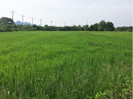 Land 7 rai 161 T.w. for sale in Pranburi