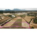 Plot 2 rai 300 T.w. for sale in Pranburi